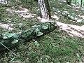 Kaniv Nature Reserve (May 2018) 21.jpg