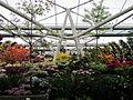 Keukenhof Garden (25).JPG