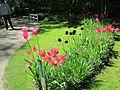 Keukenhof Garden (36).JPG