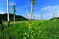 Keutschach Rauth 2 vulgo STAUPITZ Hube Kirschplantage 29052010 85.jpg