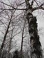 Khimselyshche, Cherkasy, Cherkas'ka oblast, Ukraine - panoramio (169).jpg