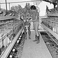 Kibboets Nir Elyahu Kibboetsbewoners bezig met het verzamelen van kippeneieren , Bestanddeelnr 255-3741.jpg