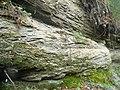 Kieselsandstein 291109.jpg