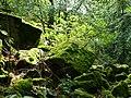 Kirschweiler, Naturschutzgebiet Silberich – Kirschweiler Festung - panoramio (4).jpg