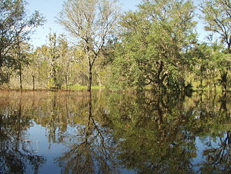 Peace River (Florida) - Image: Kissengen Spring flooded from Peace River backflow after 3 hurricanes passed through the area, October, 2005