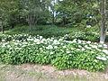 Kobe Municipal Arboretum in 2013-6-22 No,23.JPG