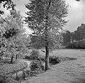 Koeien in een weiland in het Geuldal bij Schin op Geul, Bestanddeelnr 252-0197.jpg