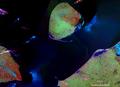 Kolguyew-NASA 2000.png