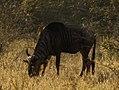 Kruger National Park (8374021240).jpg