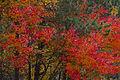 L'automne au Québec (8072570895).jpg