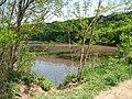 Lacul din pădurea Stejarii3.jpg