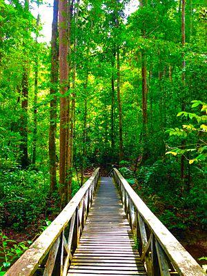 Lambir Hills National Park - A wooden bridge.