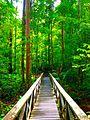 Lambir-Hills-National-Park-Wooden-Bridge.jpg