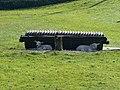 Lambs at Llangynidr - geograph.org.uk - 674576.jpg