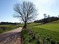 Lane to Powderham - geograph.org.uk - 1223244.jpg