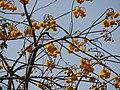 LaosVangVieng038 (46669049014).jpg