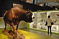 Le Musée des Confluences dévoile ses réserves (Lyon) (5472225732).jpg