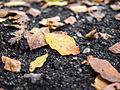 Leaf litter (8105213077).jpg