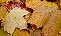 Leaves (1877599107).jpg