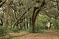 Les Estunes - panoramio.jpg