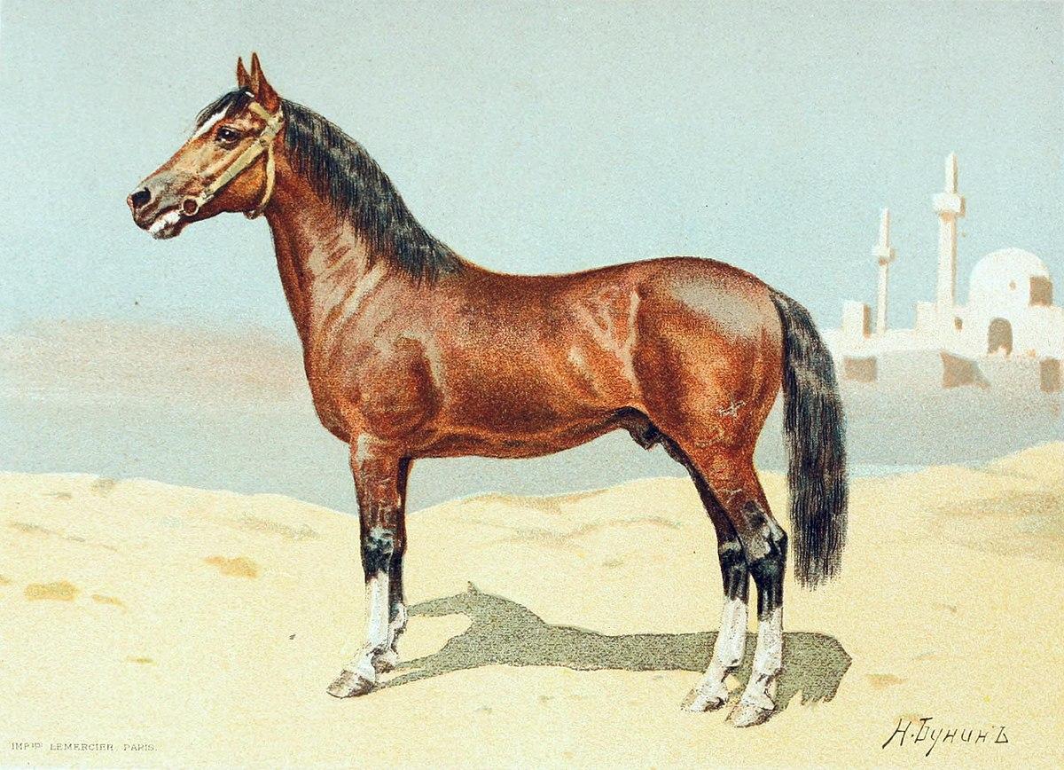 cheval du plateau persan � wikip233dia