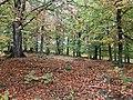 Libbhults ängar höst - panoramio.jpg