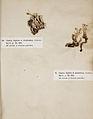 Lichenes Helvetici I II 1842 025.jpg