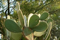 المعلومات النباتات