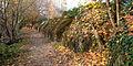 Ligne des toblerones - végétation.jpg