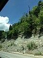 Limestone with Brush - panoramio.jpg