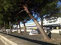 Lisboa-Portugal (34940545466).jpg