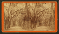 Live Oak Avenue in Bonaventure, from Robert N. Dennis collection of stereoscopic views 6.png