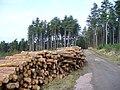 Log Stack, Barnes Wood - geograph.org.uk - 340142.jpg