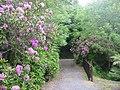 Logan Botanic Gardens - geograph.org.uk - 1002509.jpg