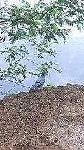 Lonely birdie(2).jpg