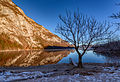 Lonely tree at Bohinj lake in the early morning.jpg