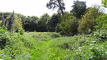 Long Wood, Norwood Green 1.JPG