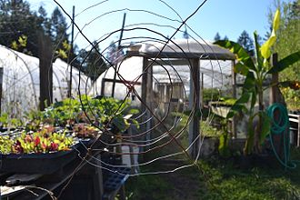 Lost Valley Educational Center - Starts for the Green House