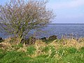 Lough Neagh - geograph.org.uk - 1210616.jpg
