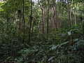 Lowland Rainforest, Masoala National Park, Madagascar (4027524958).jpg