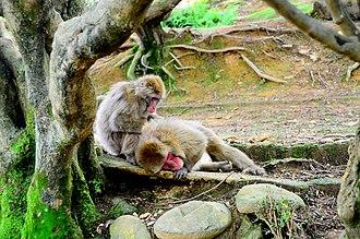 Arashiyama - Iwatayama Monkey Park