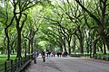 Main Allee in Central Park.NYC.jpg
