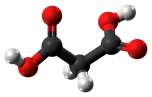 Ball-and-stick model of the malonic acid molecule
