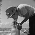 Manzanar Relocation Center, Manzanar, California. Masaro Takahashi, 19, evacuee farmer from Malibu . . . - NARA - 538535.tif