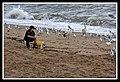 Margate Pelican Rescue- Hammy-05 (6950683903).jpg