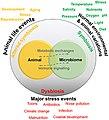 Marine animal host-microbiome relationships.jpg