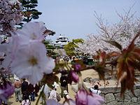 Matsuyama castle (Iyo)2.JPG