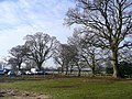 Mature trees at Bournemouth Sports Club - geograph.org.uk - 1158382.jpg