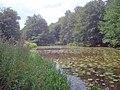 Mere Pond - 1 - geograph.org.uk - 1428204.jpg
