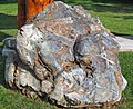 Metamorphosed pillow basalt (Ely Greenstone, Neoarchean, ~2.722 Ga; large loose block at Ely visitor center, Ely, Minnesota, USA) 1 (21266644269).jpg